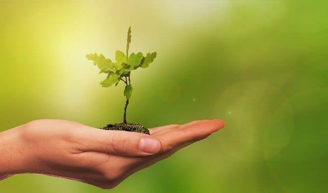Selbstliebe wachsen und gedeihen